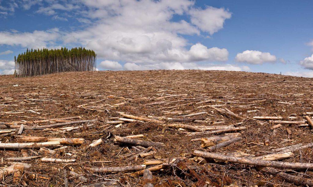 Waldrodung für Papierkonsum