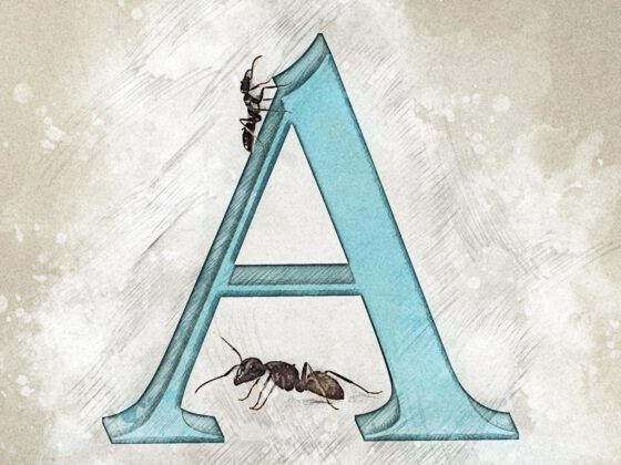A | Ants | Ameise