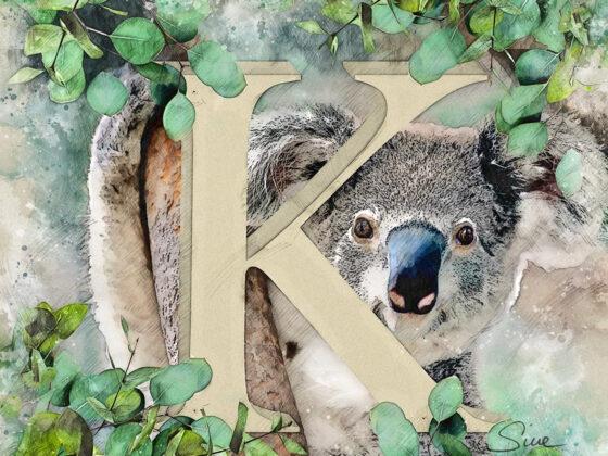 K | Koala