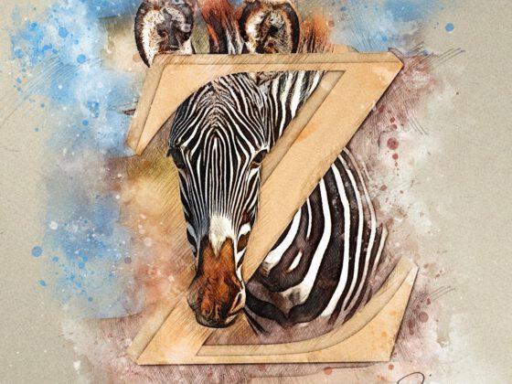 Z | Zebra